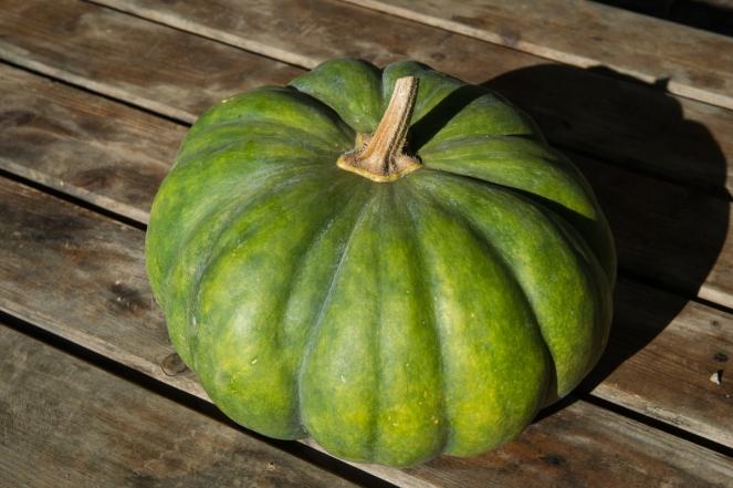 Pumpkin. Image by Carole Parodi, (c) karibou.ch